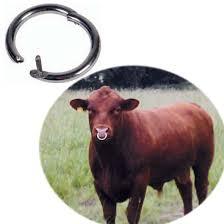 anello-per-toro